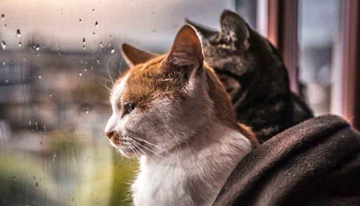 За котките не е полезно да излизат навън - DUNAVMOST.com