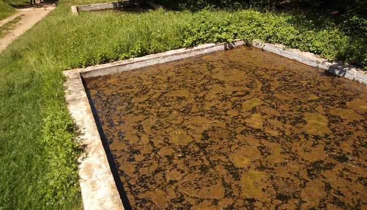 Лековити басейни в Странджа жабунясаха!