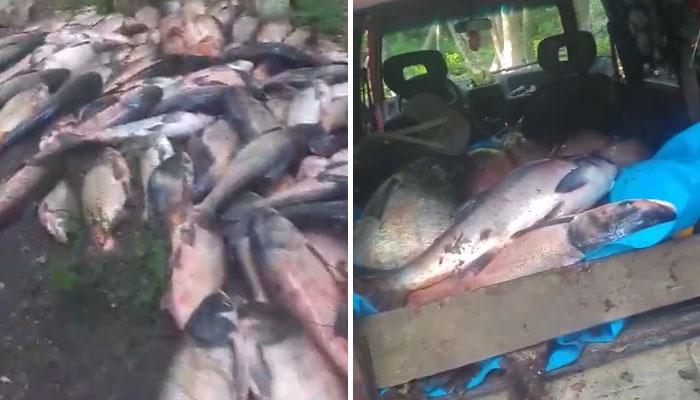 Бракониерски улов на тонове риба в язовир Камчия