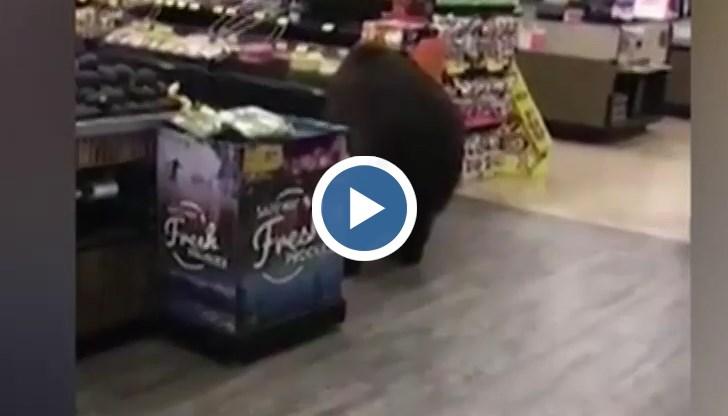 Да им завиди човек на спокойствието на хората в Калифорния, щом пазаруват редом с мечки