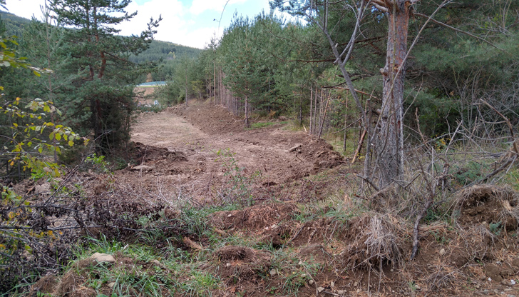 АБВ алармират за нова сеч в борова гора на Витоша