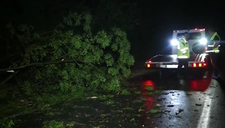 Паднали дървета и поредица от катастрофи в Русе заради бурята